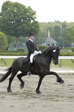 Friesian horses for sale, Hennigan Friesians